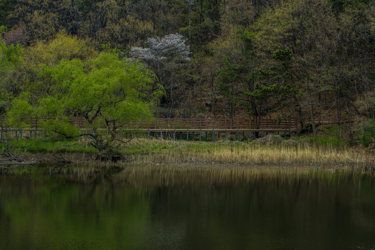 Astronomy Beauty In Nature Day Forest Grass Growth Lake Landscape Nature No People Outdoors Reflection Rice Paddy Scenics Standing Water Tranquil Scene Tranquility Tree Water