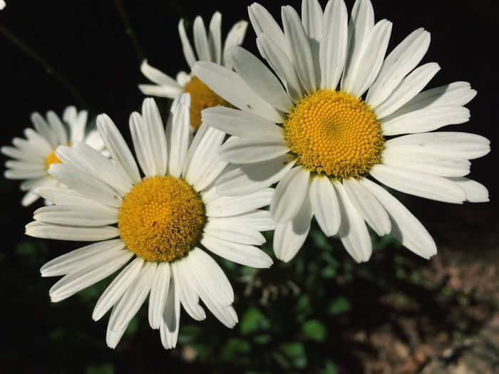 Maximum Closeness Flower Fragility Beauty In Nature Nature