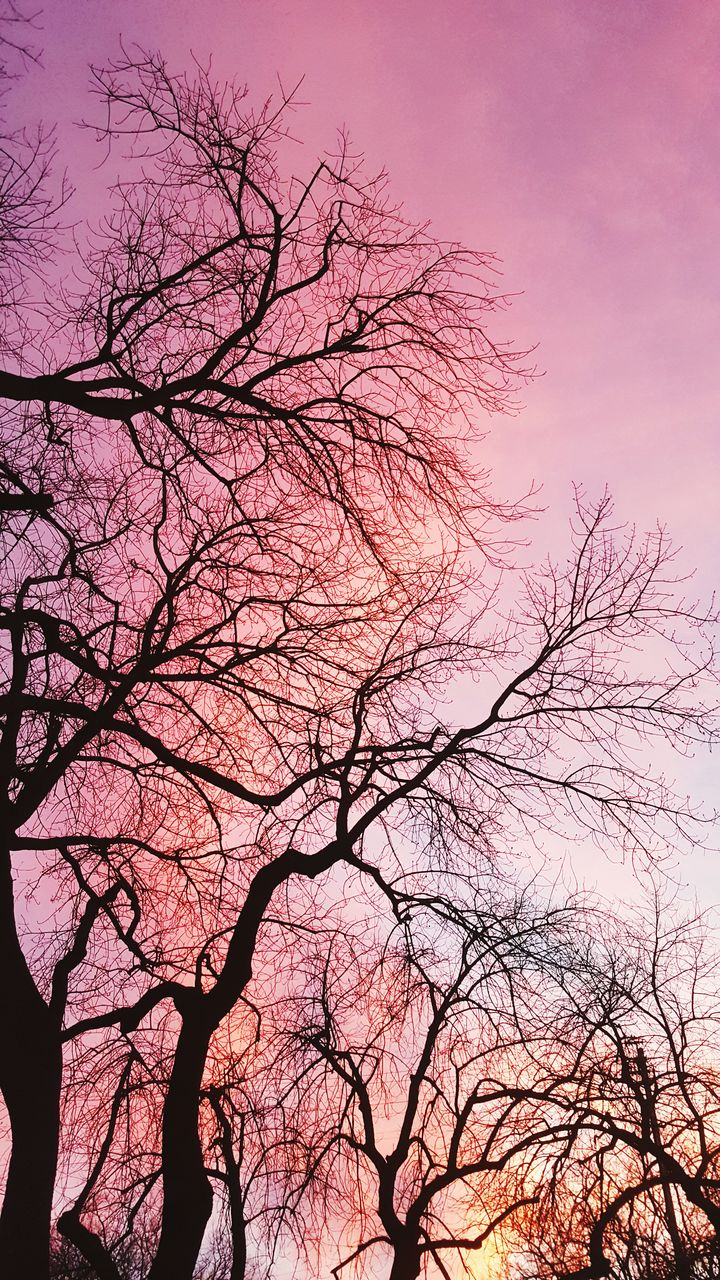 bare tree, tree, beauty in nature, branch, nature, low angle view, sky, sunset, tranquility, outdoors, silhouette, no people, pink color, scenics, clear sky, day