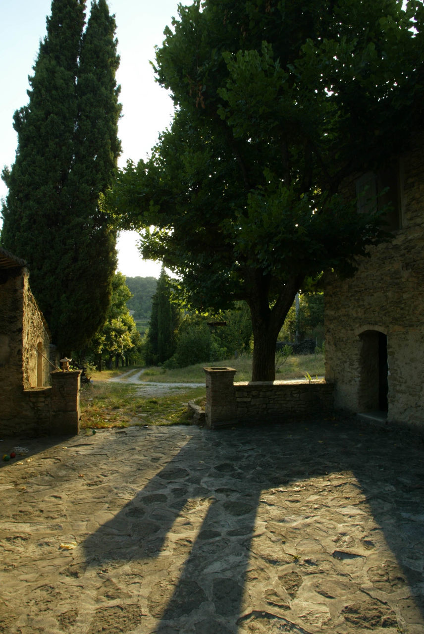 tree, history, shadow, day, no people, outdoors, nature, architecture, sky