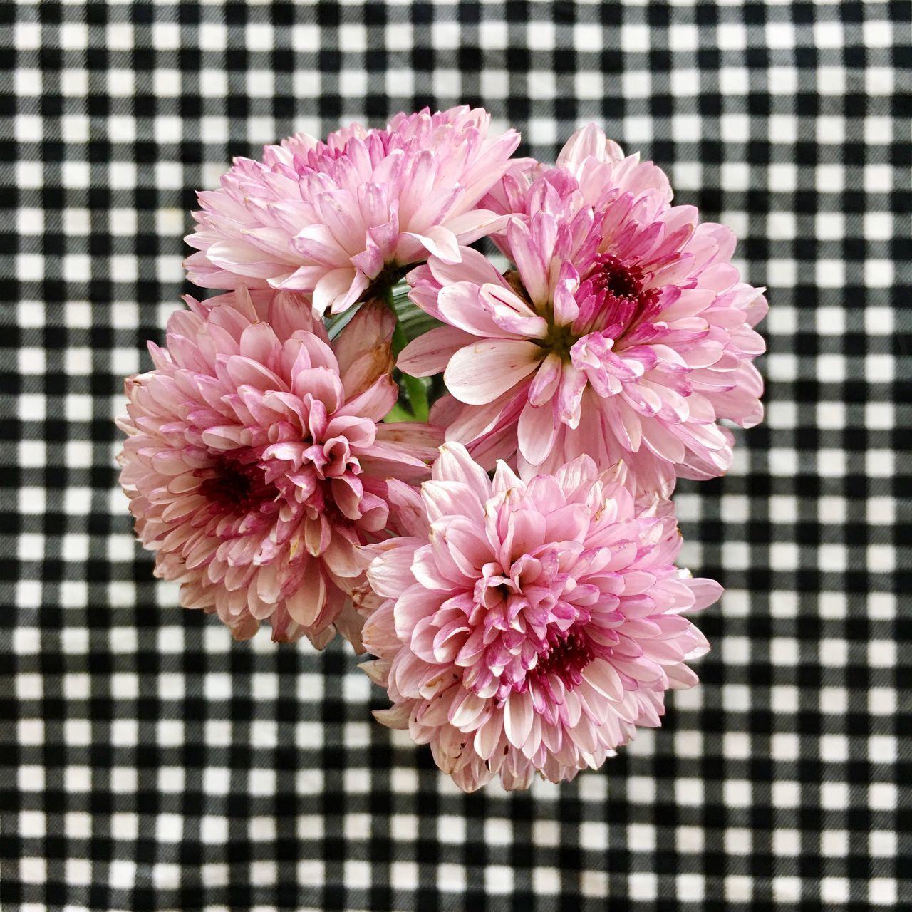 Flower Close-up Pink Color Freshness No People Petal Flower Head Fragility Indoors  Nature Day Flower Arrangement Dahlia