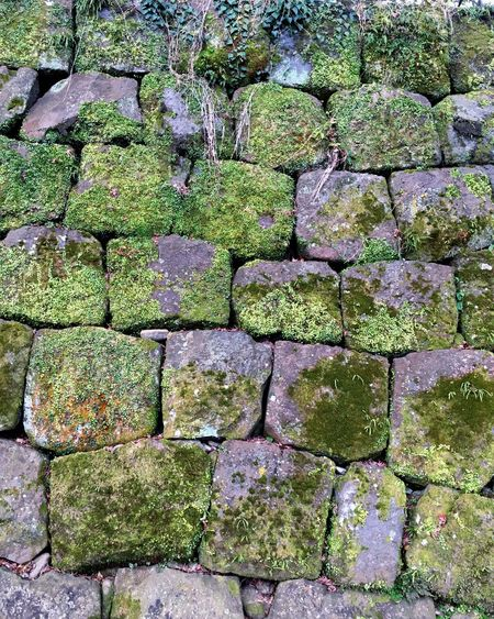 Stone walls Stone Material No People Full Frame Outdoors Day Close-up Backgrounds Nature Moss Nature Photography Blooming EyeEmNewHere Eyeem Photography EyeEm EyeEm Gallery Japan Photography Green Color Stone Wall Beauty In Nature Eyeemphotography Built Structure Full Length Twig Roots
