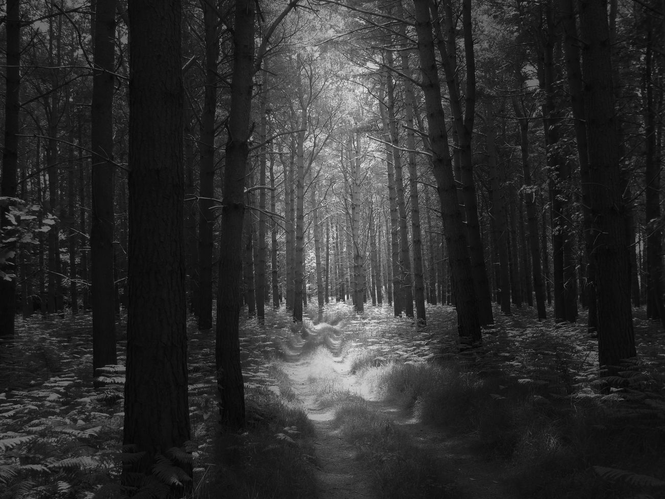 Blackandwhite Black And White Eye4photography  Monochrome