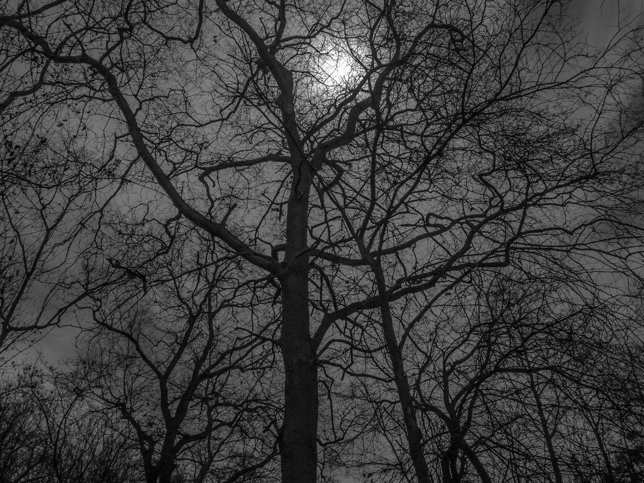 bare tree, tree, branch, low angle view, nature, outdoors, tranquility, no people, beauty in nature, day, forest, sky