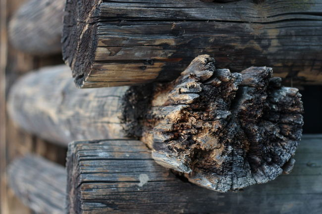 Wood - Material Close-up Weathered Wooden Old Detail Textured  Wood Selective Focus Brown Outdoors 50mm Minimundus