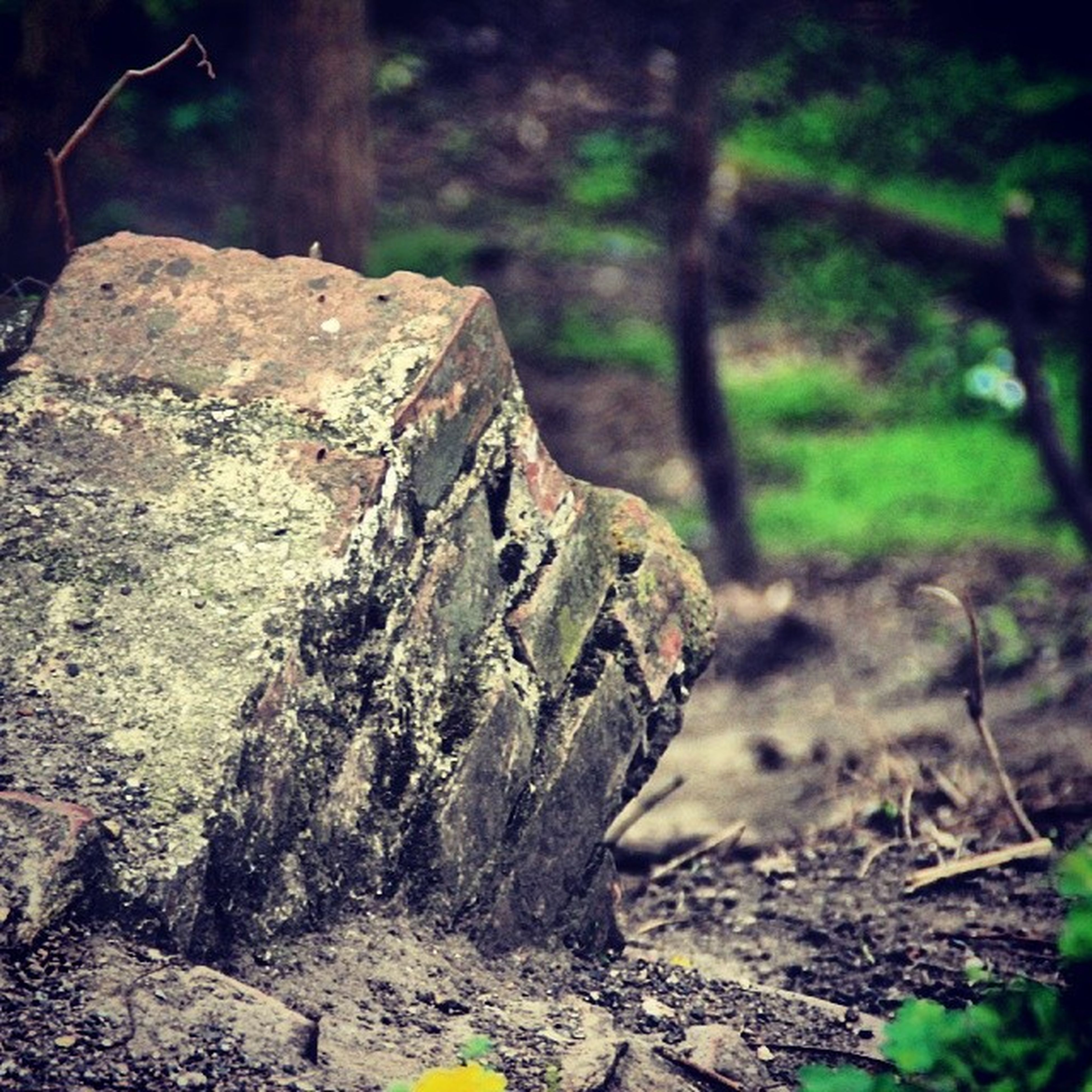 forest, nature, tree trunk, rock - object, focus on foreground, moss, close-up, tree, fungus, textured, growth, outdoors, mushroom, day, tranquility, selective focus, log, no people, rock, wood - material