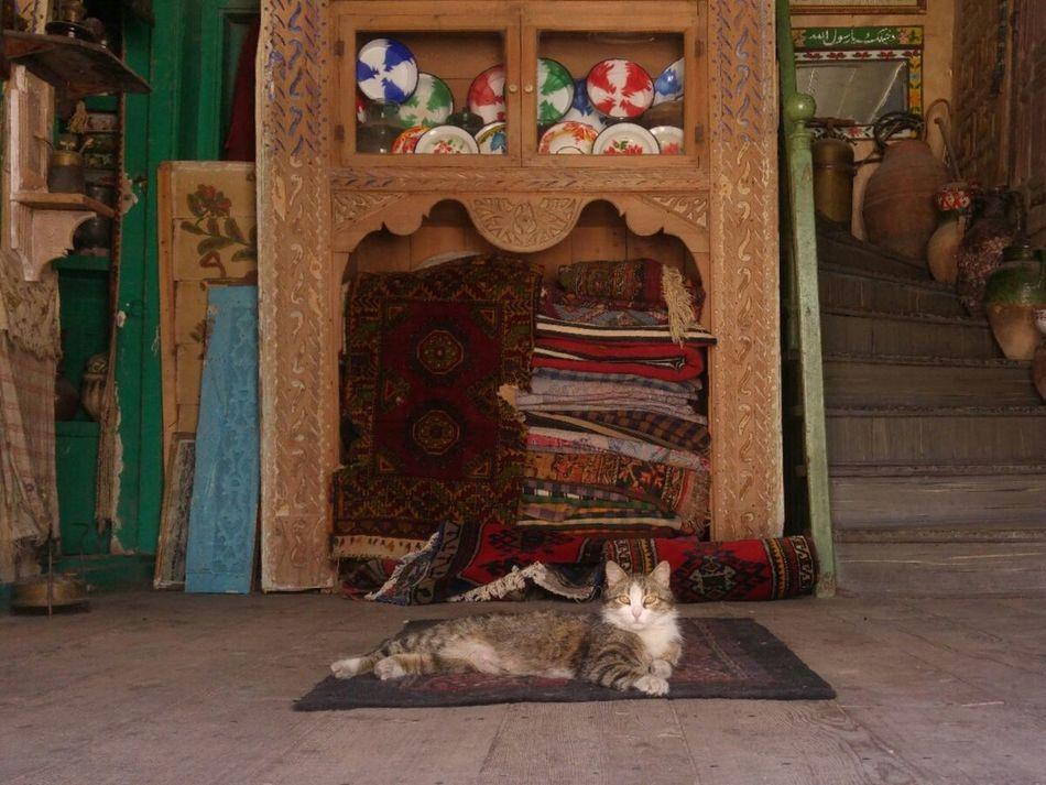 Door One Animal Travel Destinations Animal Pets Indoors  Animal Themes Architecture Cat Cat Lovers Antique Nostalgia Turkey Türkiye EyeEm Team EyeEm Gallery Indoors  Konya Konya Turkey Konyagram