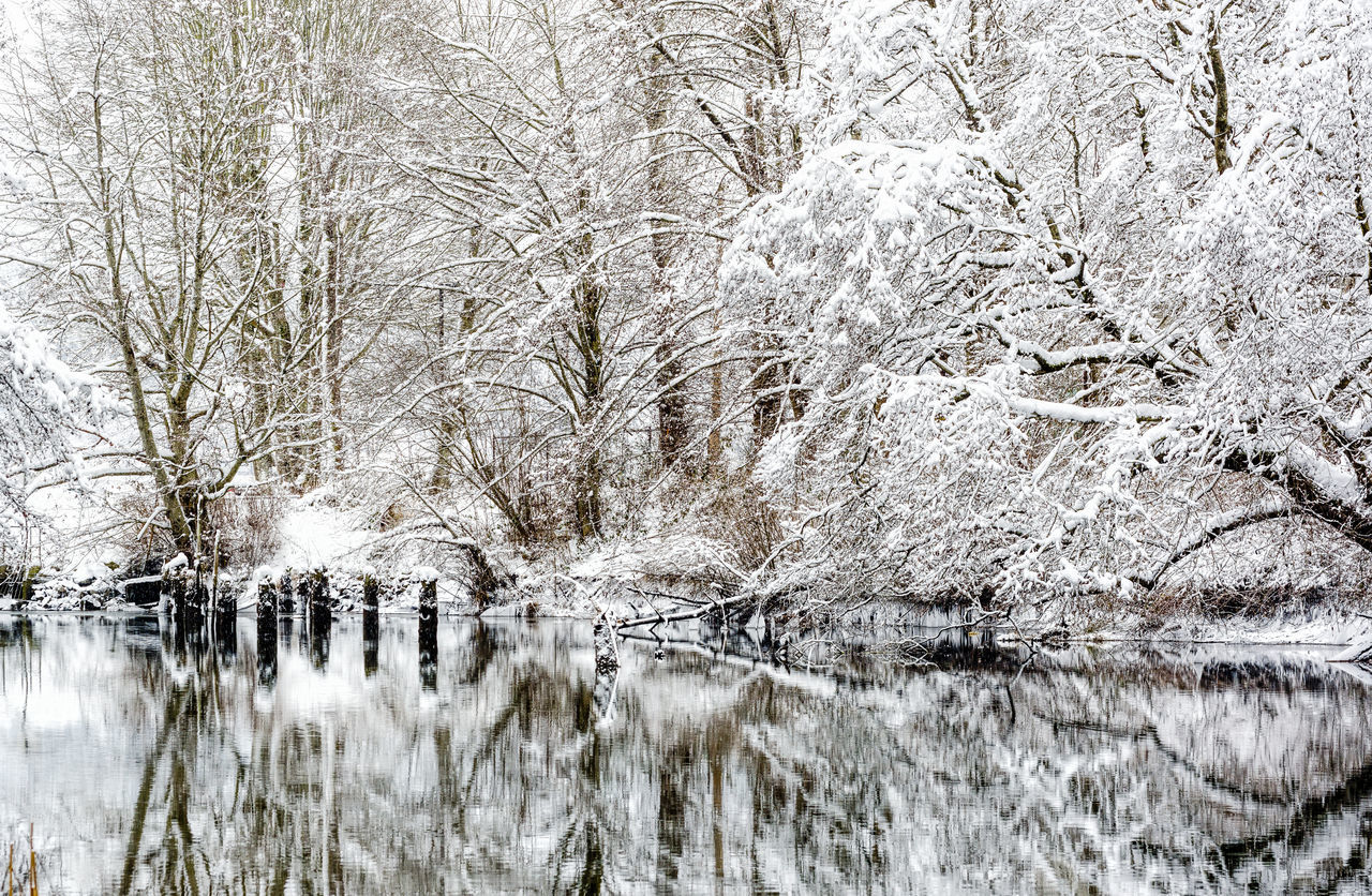 Bare Tree Beauty In Nature Branch Cold Temperature Day Nature No People Outdoors Reflections Scenics Sky Snow Snowing Tranquil Scene Tranquility Tree Water Winter