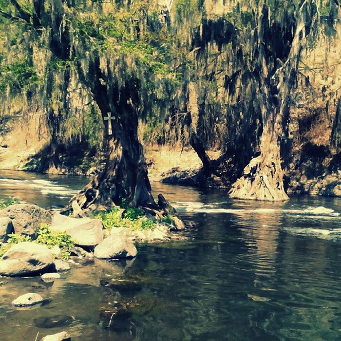 Walking by the river... Water River Trees Oldtrees Stones Green Nature Life Littlethings Awesomeview Progreso Mexico Picture Photo Photography Aliens Alien BillKaulitz  Tomkaulitz Georglisting Gustavschäfer