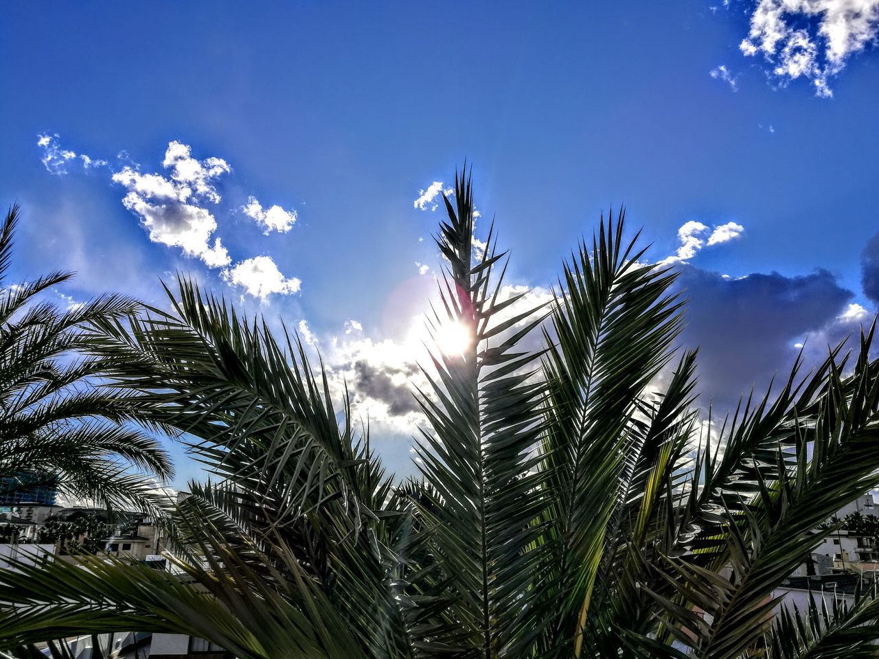 Blue sky with Palms... Growth Sunlight Nature Sunset Sky Outdoors Beauty In Nature Day PalmaDiMaiorca GetbetterwithAlex Trees And Nature Originalpicture Palms