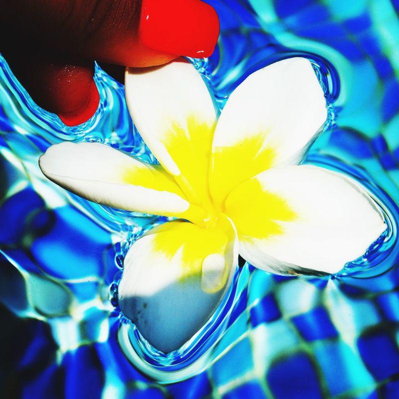 Nice Atmosphere Beautiful Surroundings Pool Holiday Relaxing Magnolia Throwback Blue Holiday Sanya