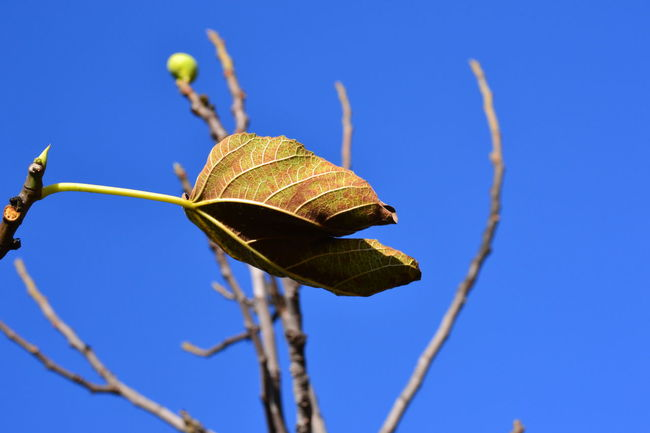 Autumn Beauty In Nature Blau Blue Clear Sky Close-up Day Flower Fragility Growth Himmel Horizontal Low Angle View Nature No People Outdoors Sky Sunflower The Last One