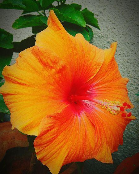 Blossom Flowers ORANGE Love💛