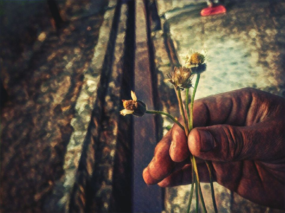 Human Hand Real People One Person Human Body Part Animal Themes Day Outdoors Close-up People Streetphotography Mobilephotography Flowers Flower Collection Nature Photography Phone Art Prismacolor Prisma Photo Prisma Application