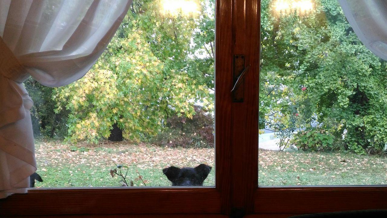 Window Window Indoors  Curtain Day Home Interior No People Horizontal Dog Dogslife First Eyeem Photo