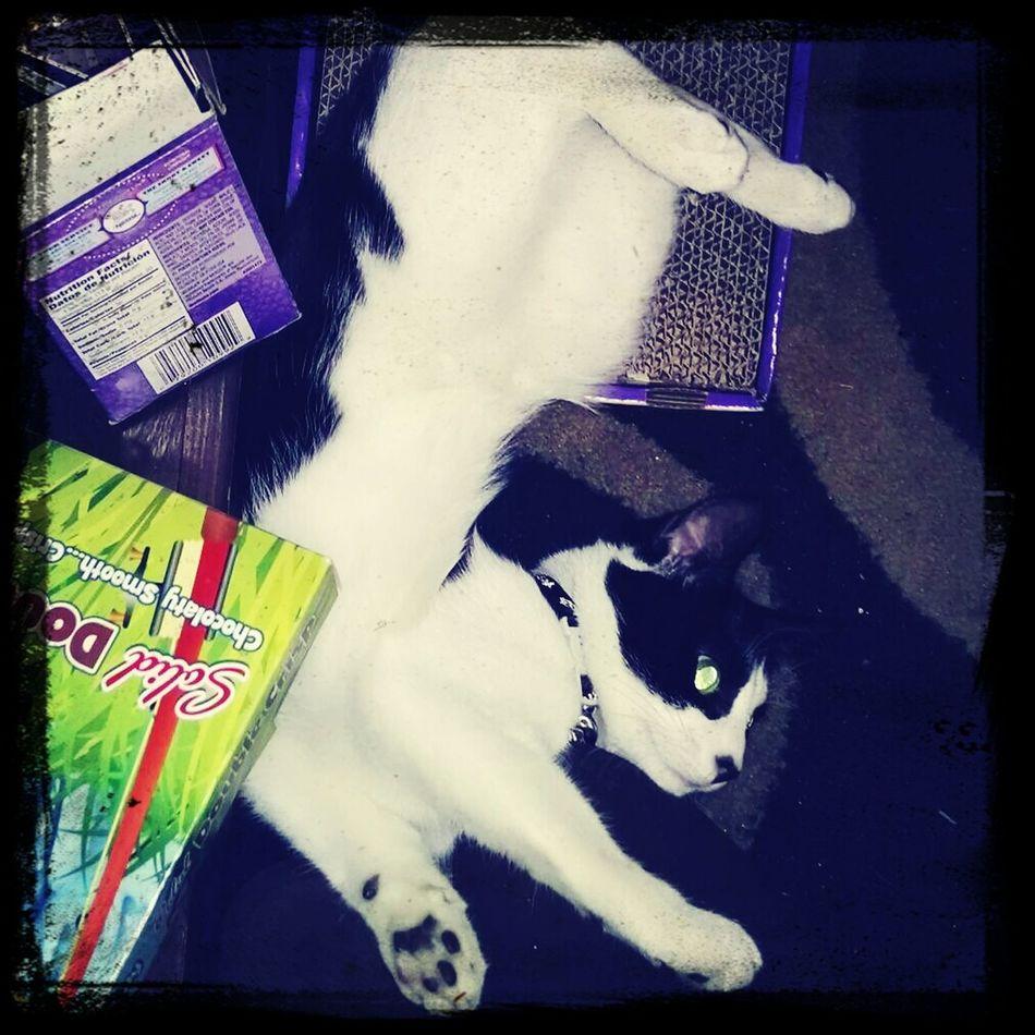 Cat♡ Cat Lovers Crazy Kitty Calypso