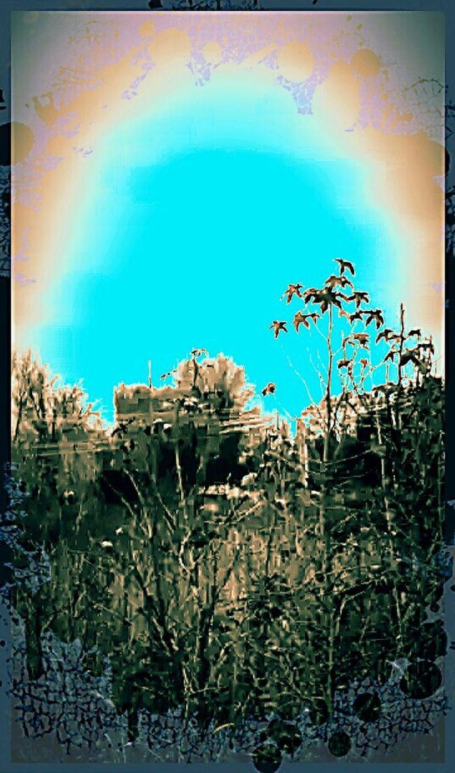 Nature LoverNature Lover Sunset_collection EyeEm Best Edits Silohette
