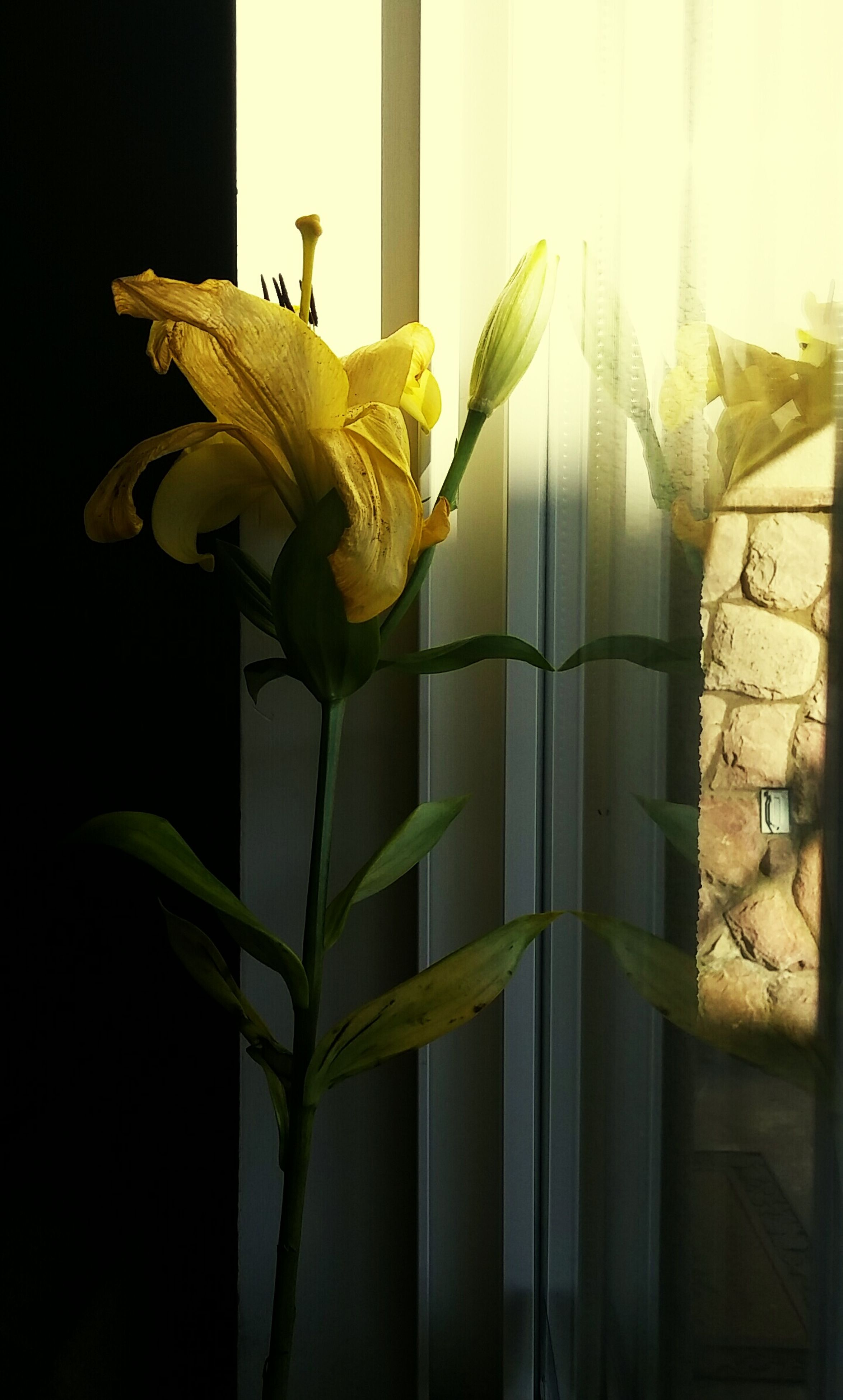 plant, growth, flower, close-up, stem, wall - building feature, fragility, leaf, nature, freshness, yellow, sunlight, no people, indoors, wall, focus on foreground, built structure, day, fence, petal