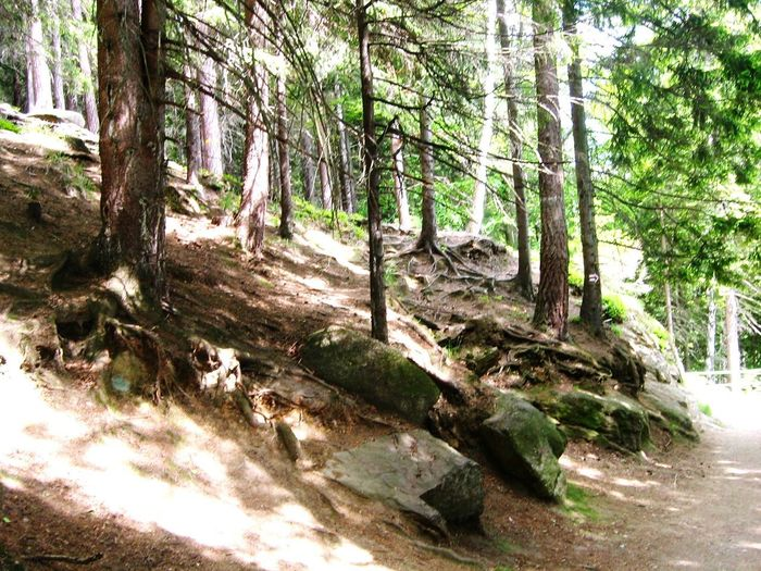 Forest Forest Photography Rote Wonderland Love Polska Landscape Karpacz Mountain Kanion Tree Day Nature Tree Trunk Growth No People Outdoors Forest Green Color Sunlight Plant Shadow Branch Beauty In Nature EyeEmNewHere