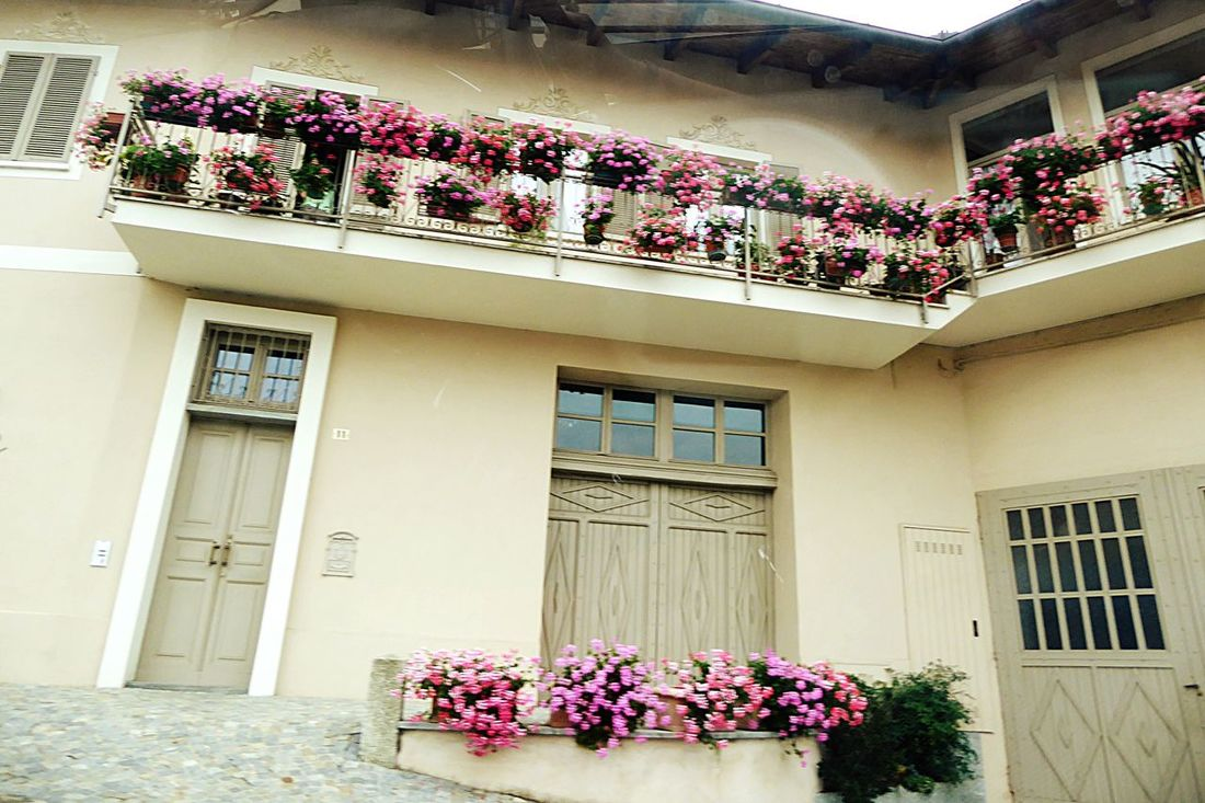 Italy🇮🇹 Taking Photos Fine Art Photography Fine Art Romantic Building Taking You On My Journey 😎 Colour Of Life EyeEm Gallery Flowers Warm Colors Wall Decoration Wall Art Artistic Historical Building Details Of My Life Fine Art Photograhy Color Palette Outdoor Photography Barolo City