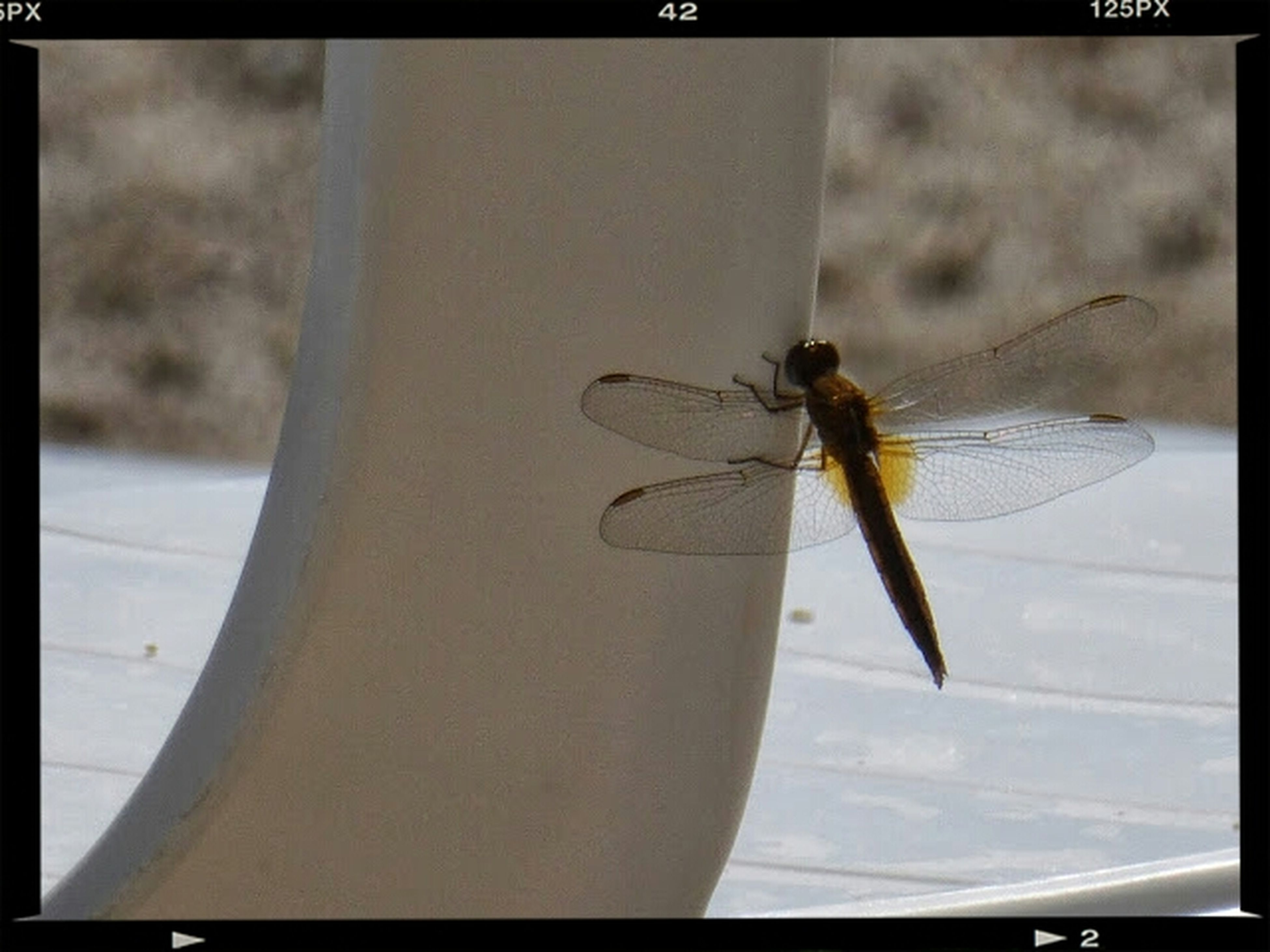 insect, animal themes, one animal, animals in the wild, wildlife, transfer print, auto post production filter, focus on foreground, close-up, animal wing, spider, flying, spread wings, day, full length, outdoors, dragonfly, no people, zoology, animal antenna