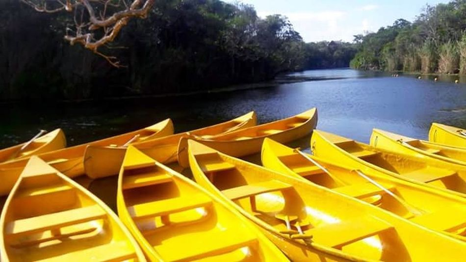 Lake Yellow Reflection Water Tree Kayak Nature No People Nautical Vessel Outdoors Day Pedal Boat Cosumel Mexico City Cenotes Travel Destinations Traveling Travel Photography