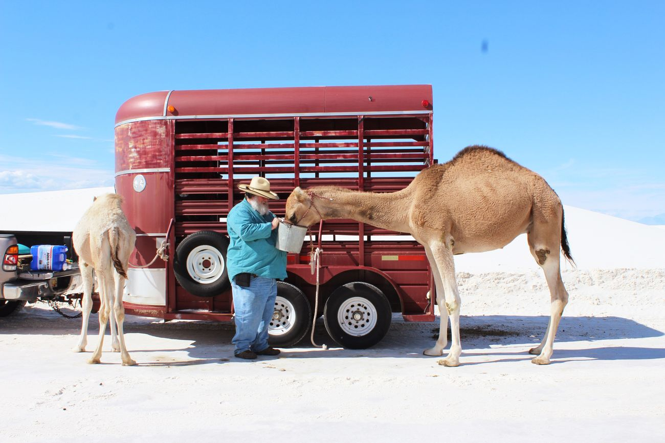 People And Places Newmexico Whitesands Aminal Nurture And Nature Transportation Clear Sky Welcome Weekly