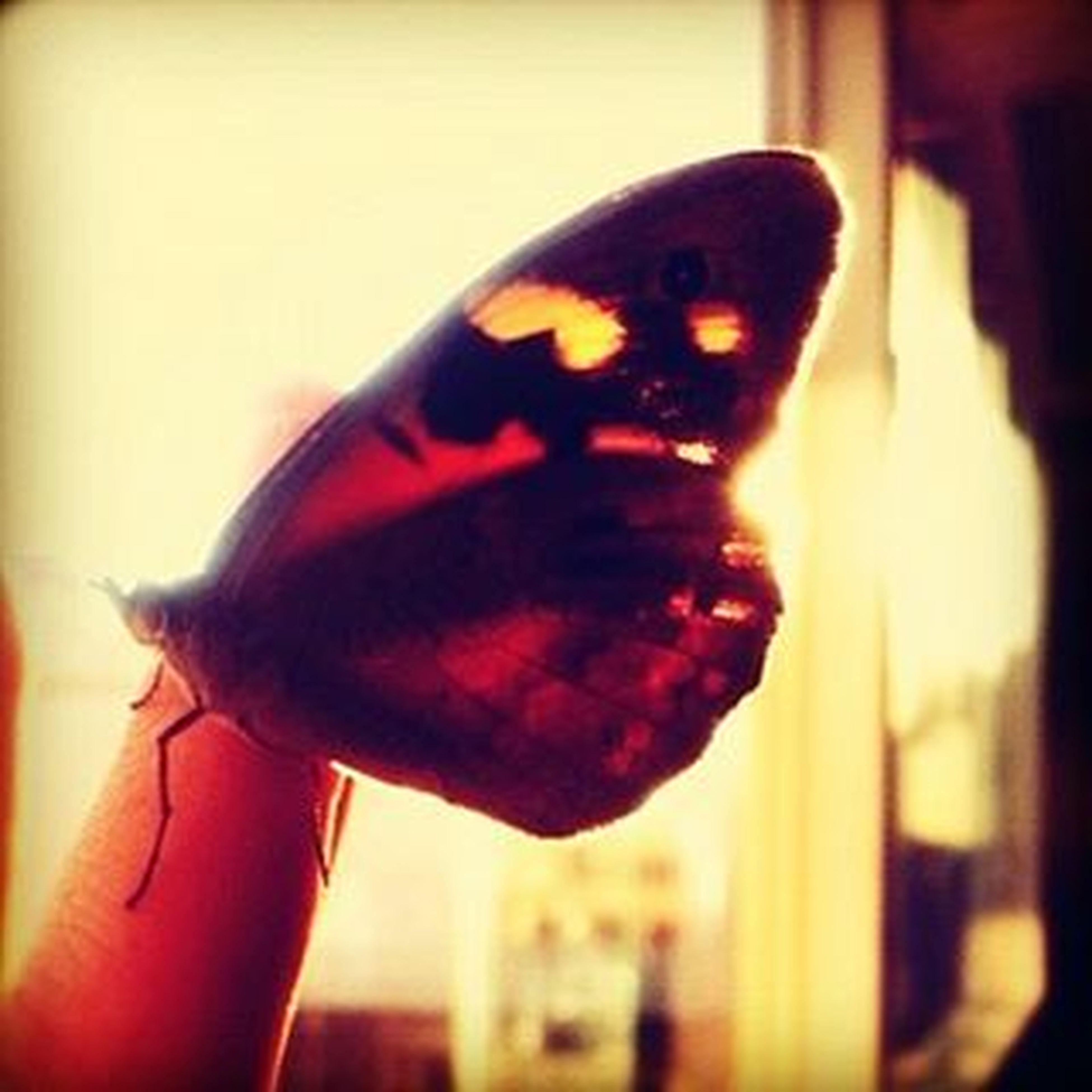 Όταν ανοίγεις τα παράθυρα να μπεί φως. Happymornings Gmorningworld Butterfly Light Sun Sunnyday Colourful Beautifulcreature υπαρχουν_και_αυτα ναομορφαινουνταπρωιναμασ αθηναρα εχεισκιεσυτατυχερασου φιλδελοβ λοβδεσοουλ Flylikeabutterfly Befree Embraceyourfreedoms LoveYourself