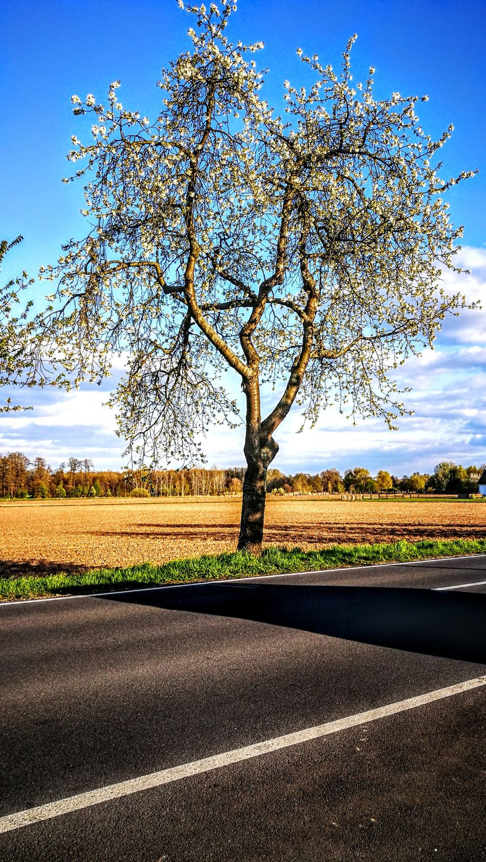 Golden Afternoon...im Wendland... Sky Road Nature Scenics Outdoors Landscape No People Day Beauty In Nature GetbetterwithAlex Tranquil Scene Originalpicture Beauty In Nature