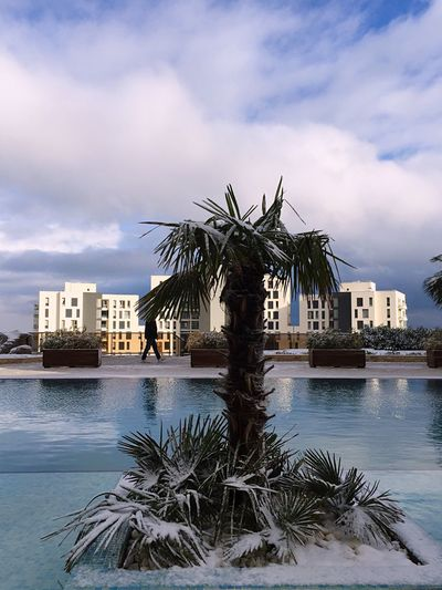 Tree Palm Tree Cloud - Sky Building Exterior Sky Architecture Water Outdoors Growth Built Structure City Sea Nature No People Day Waterfront Snow Winter