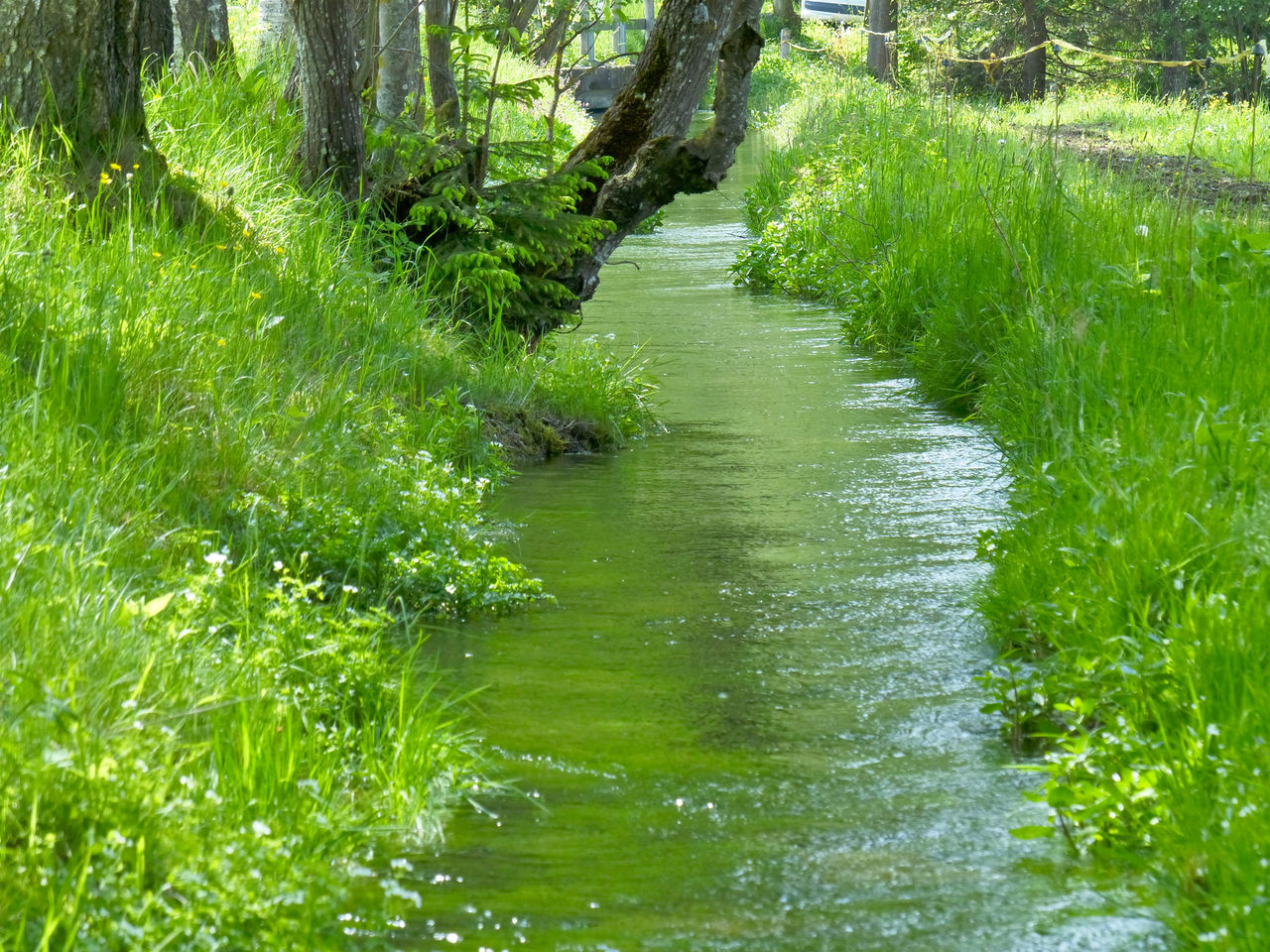 Reflection Of Lush Foliage In Stream