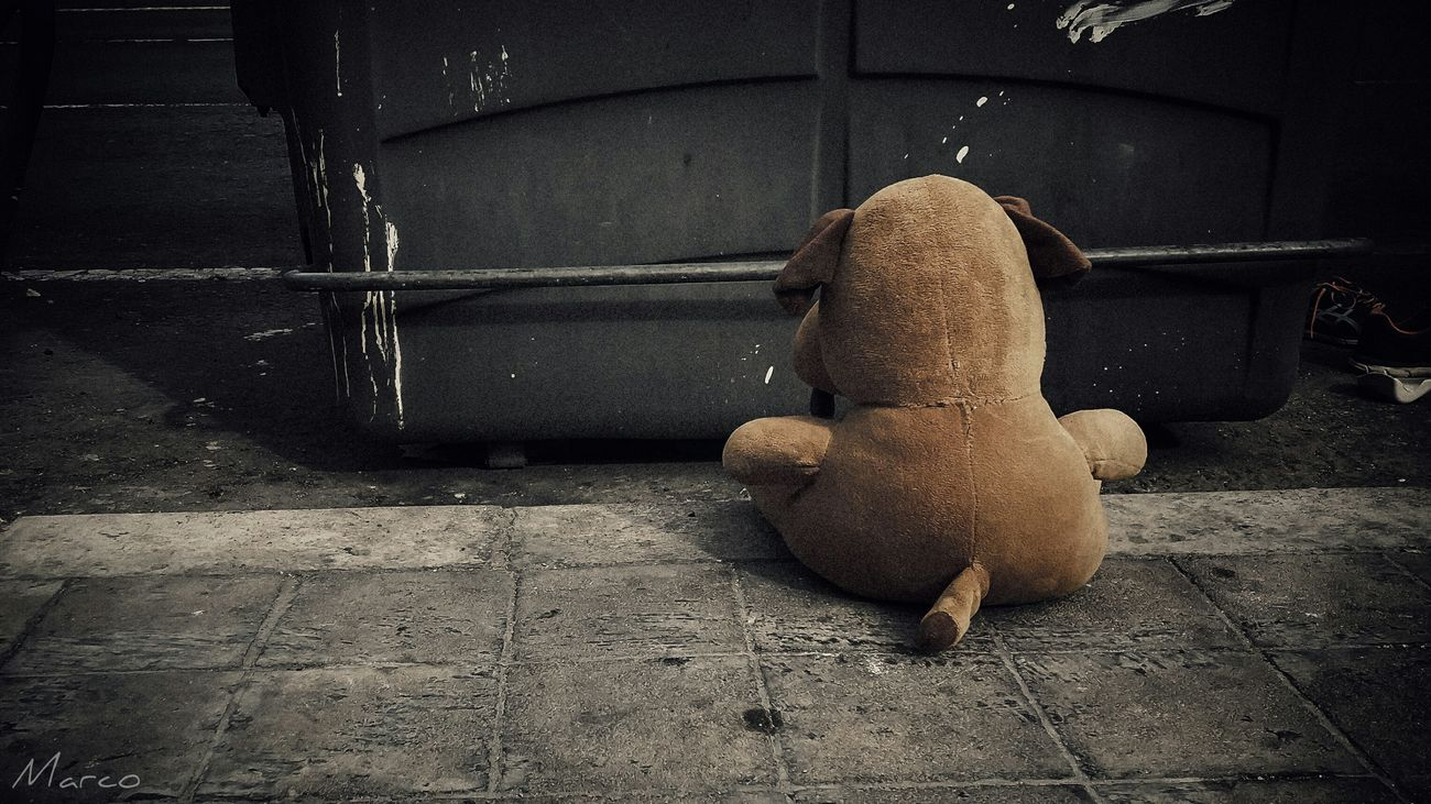 Abandoned Teddy Teddylove Urbanphotography Streetphotography Street Light HDR Lifestyles Picsartrefugees Dog One Animal