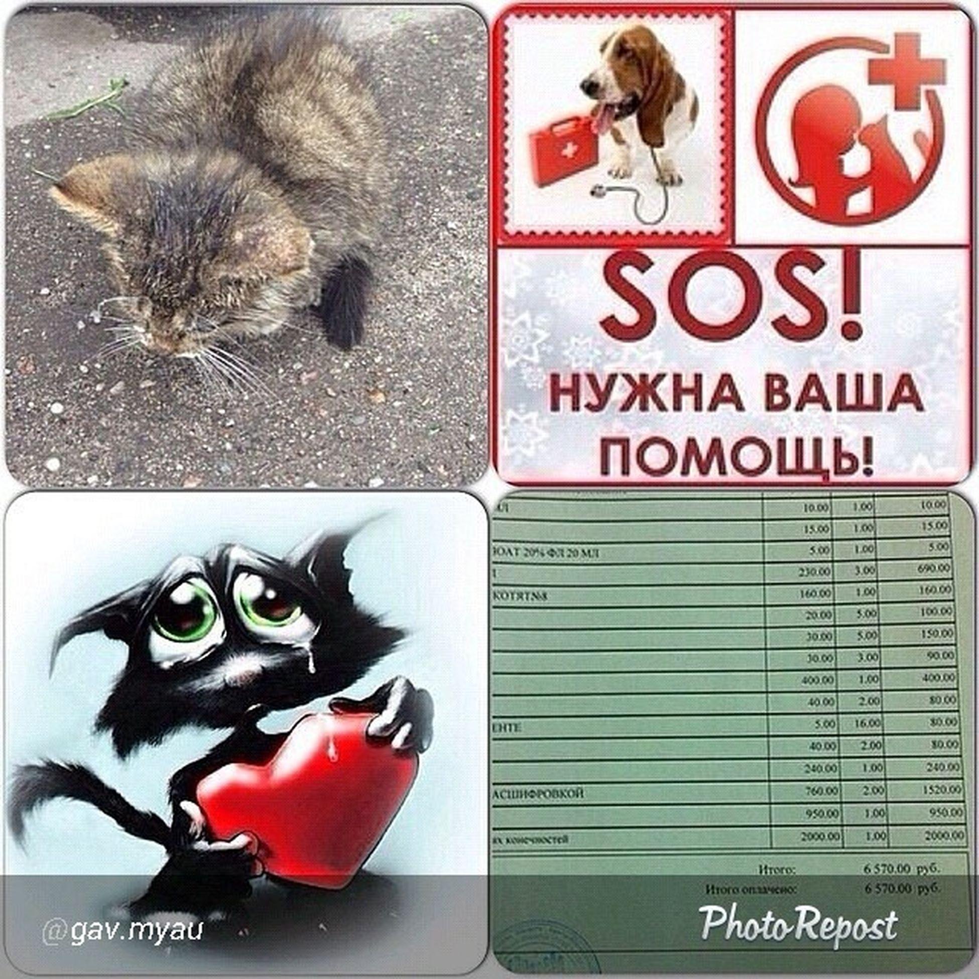 """By @gav.myau """"ОЧЕНЬ НУЖНА ФИНАНСОВАЯ ПОМОЩЬ!!! Друзья, мы нашли двух котят в подвале, на вид не больше месяца, совсем малютки. Похоже что кошка бросила их, самостоятельно не едят! Они практически не ходят, все в лишаях! Требуется срочная помощь и лечение! Дома держать нельзя, а для дальнейшей передержке в клинике необходимы немаленькие денежные средства! ПОМОГИТЕ кто сколько может!!!! На сегодняшний день долг составляет -6570 руб. ПОМОГИТЕ КТО СКОЛЬКО СМОЖЕТ!!! ФИНАНСОВУЮ ПОМОЩЬ можно перечислить: 💳 Карта СберБанка 4276 8800 5926 0525 👛 Яндекс Кошелек 4100 1222 2906 668 👛 QIWI Кошелек +7 906 212 88 11 📞 Голодный номер Билайн +7 906 212 88 11"""" via @PhotoRepost_app требуется_помощь нужна_помощь не_проходите_мимо"""