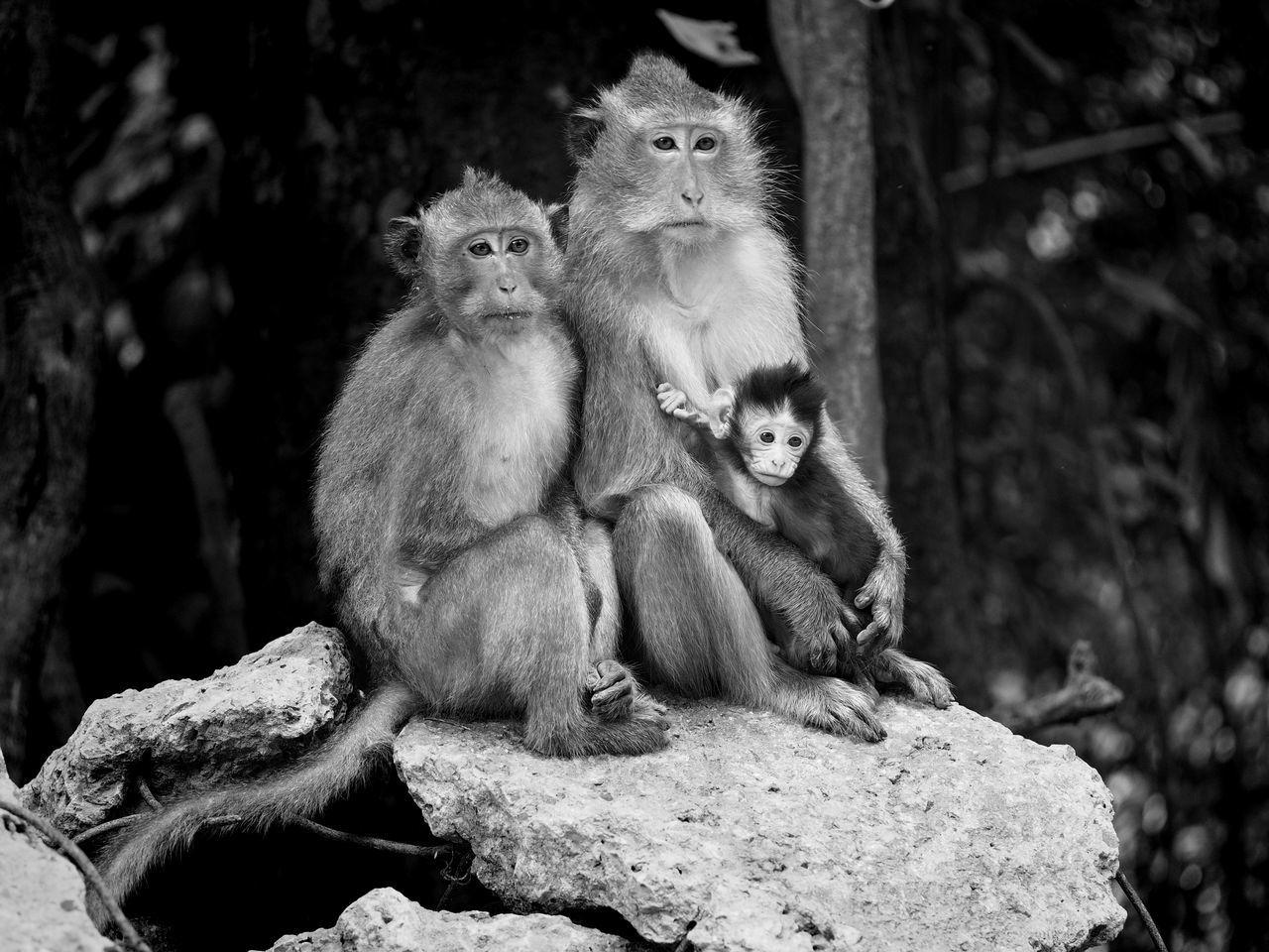 Monkeys Sitting On Broken Concrete In Forest
