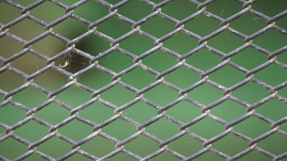 Beauty, Once you find peace then you can explore beauty everywhere. Full Frame Backgrounds Chainlink Fence Close-up Fence Pattern Protection No People Metal Textured  Day Outdoors Beauty Beauty In Ordinary Things Nwin Photography SonyAlpha6000 Sony A6000 Peaceful Mind Beauty Concept EyeEmNewHere