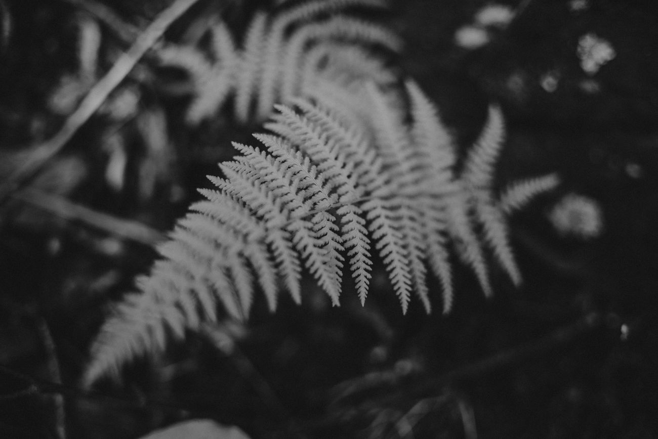Fern Tennessee B&w Black And White Lush Desktop Nature Still Life Outdoors Great Smokey Mountains