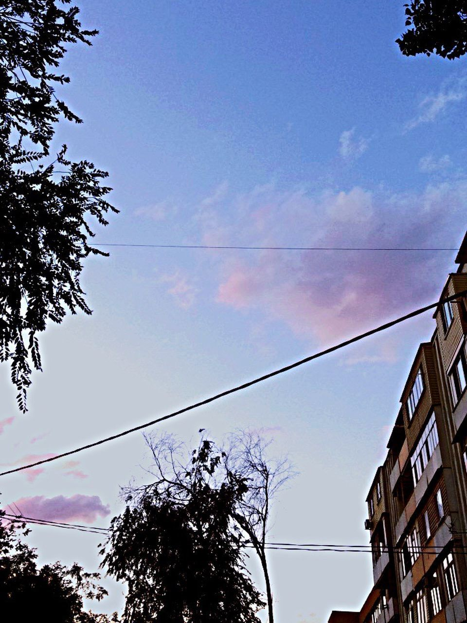 low angle view, tree, sky, cable, outdoors, power line, day, no people, cloud - sky, telephone line, nature, electricity pylon, technology
