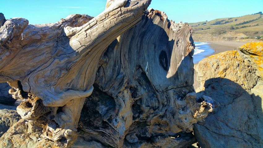 Driftwood Driftwood Weathered Weathered Tree Stump Shore Distance Depth Zen Awe Inspiring Copy Space Rewilding Interesting Unusual Nature's Art Art Contrast Large Focus On Foreground Rock - Object Outdoors Nature Landscape Mountain Day Sand Travel Destinations