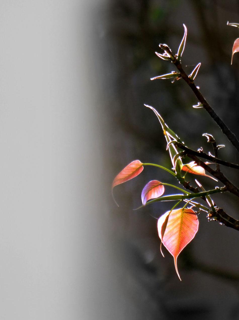 Beautiful Beauty In Nature Day EyeEm EyeEm Best Shots - Nature EyeEm Nature Lover EyeEmNewHere Freshness Growth Nature New New Beginnings New Leaves New Life New Life & New Hope New Life Begins New Life In Spring New Start No People Orange Color Outdoors Sunlit Sunshine Tender Tenderness