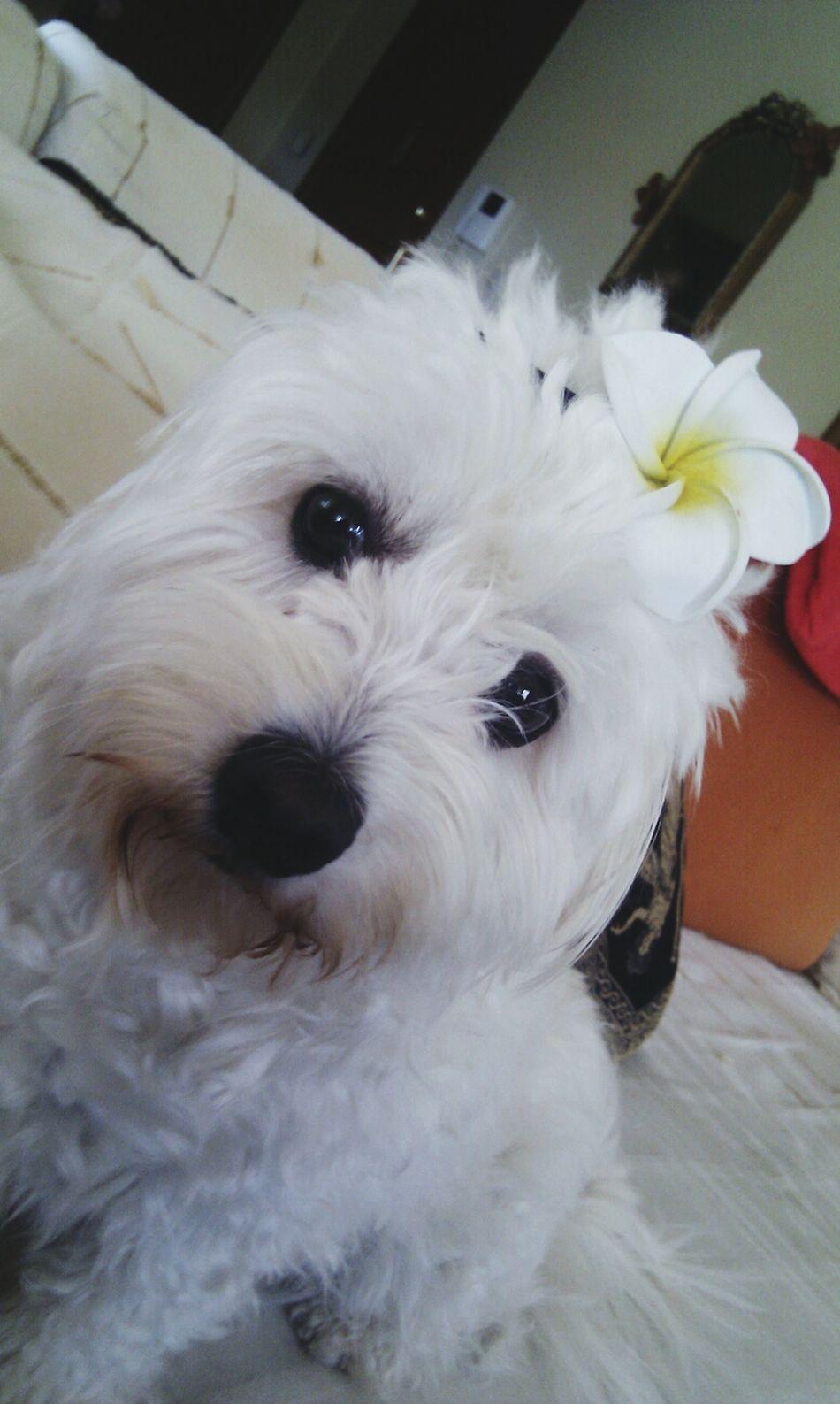 melita My Pet Dog :)