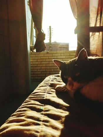 Domestic Animals Animal Themes One Animal Pets Mammal Indoors  Domestic Cat Cat Day Feline Zoology Sunbeam Backlit Loyalty Pampered Pets Animal Bed Cat Male Gray Tom Jerry Cartoonsunlight