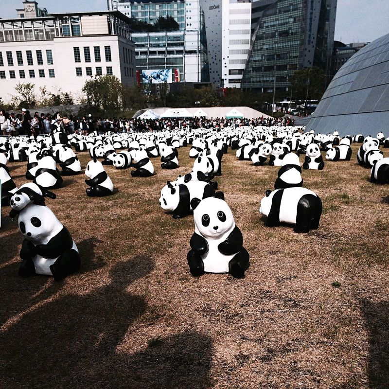 PANDA ♡♡ 1600pandas EyeEm Korea Seoul, Korea