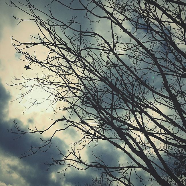 Jetting across....... Hello World Picoftheday Check This Out Bestoftheday Flying Fly Tree_collection  Clouds And Sky Dreary Monday Morning... Branches Skyporn Cloudy Ominous Blah