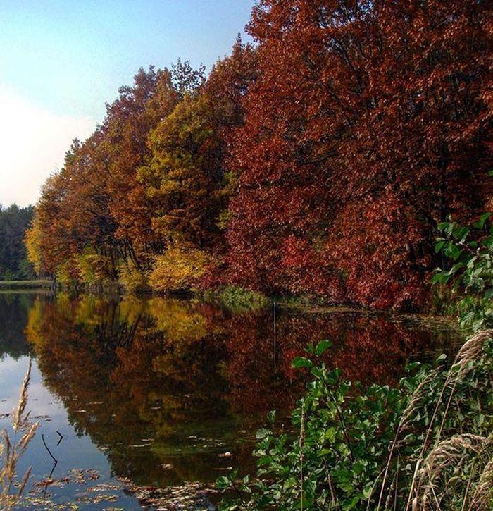 12 Hours, 360 Miles. Autumn Nature Woods Nofilter Welesie Vscocam Vscogood Vzcopl Instarybnik