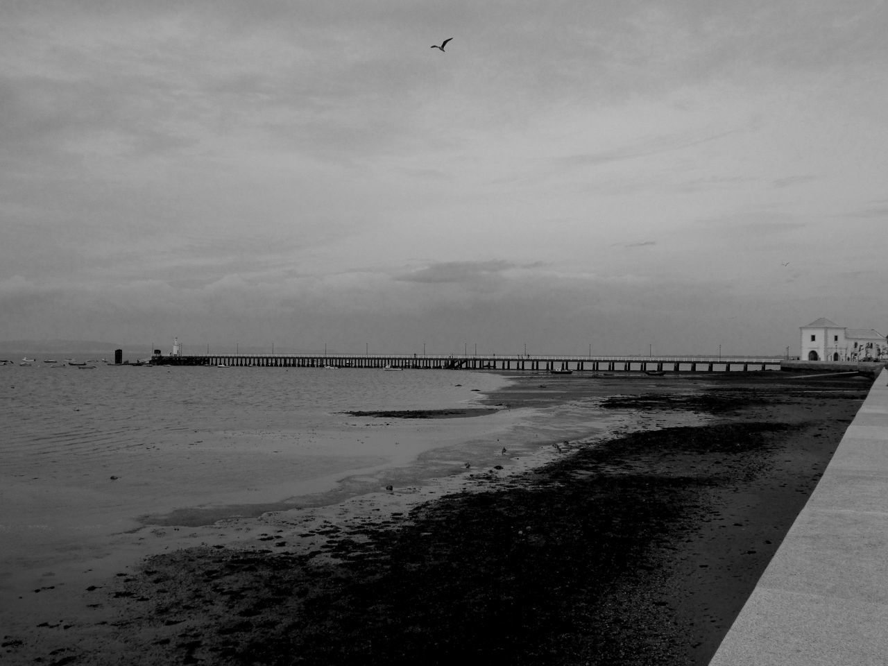 sea, water, bird, beach, nature, sky, tranquility, tranquil scene, horizon over water, outdoors, day, beauty in nature, flying, scenics, animal themes, no people, architecture