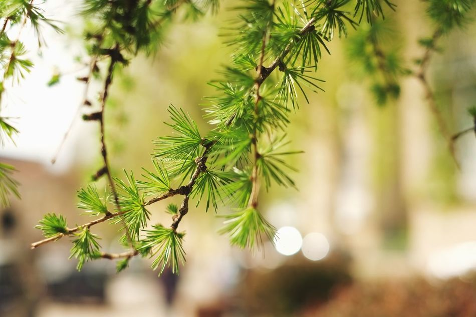 The city is blooming. Let the green grow so more. Growth Focus On Foreground Nature Close-up No People Green Color Day Beauty In Nature Needle Outdoors Tree Plant Freshness Urban Green Green Color