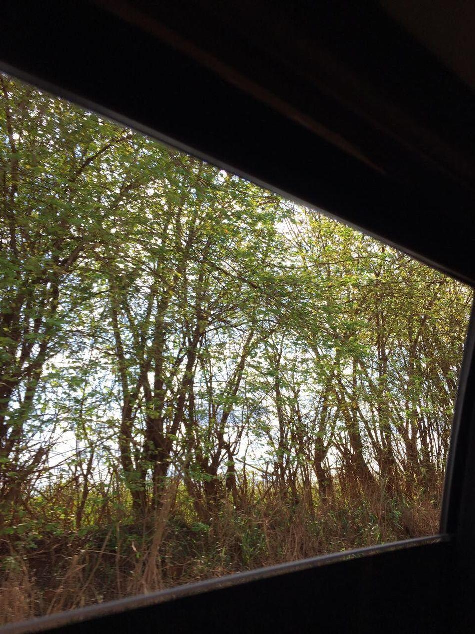 {é tão incrível quando vc esta viajando e tem a oportunidade de observar essas paisagens...} Nature Day No People Tree Growth Plant Low Angle View Travel Destinations Indoors  Tranquility Naturaly & Perfect