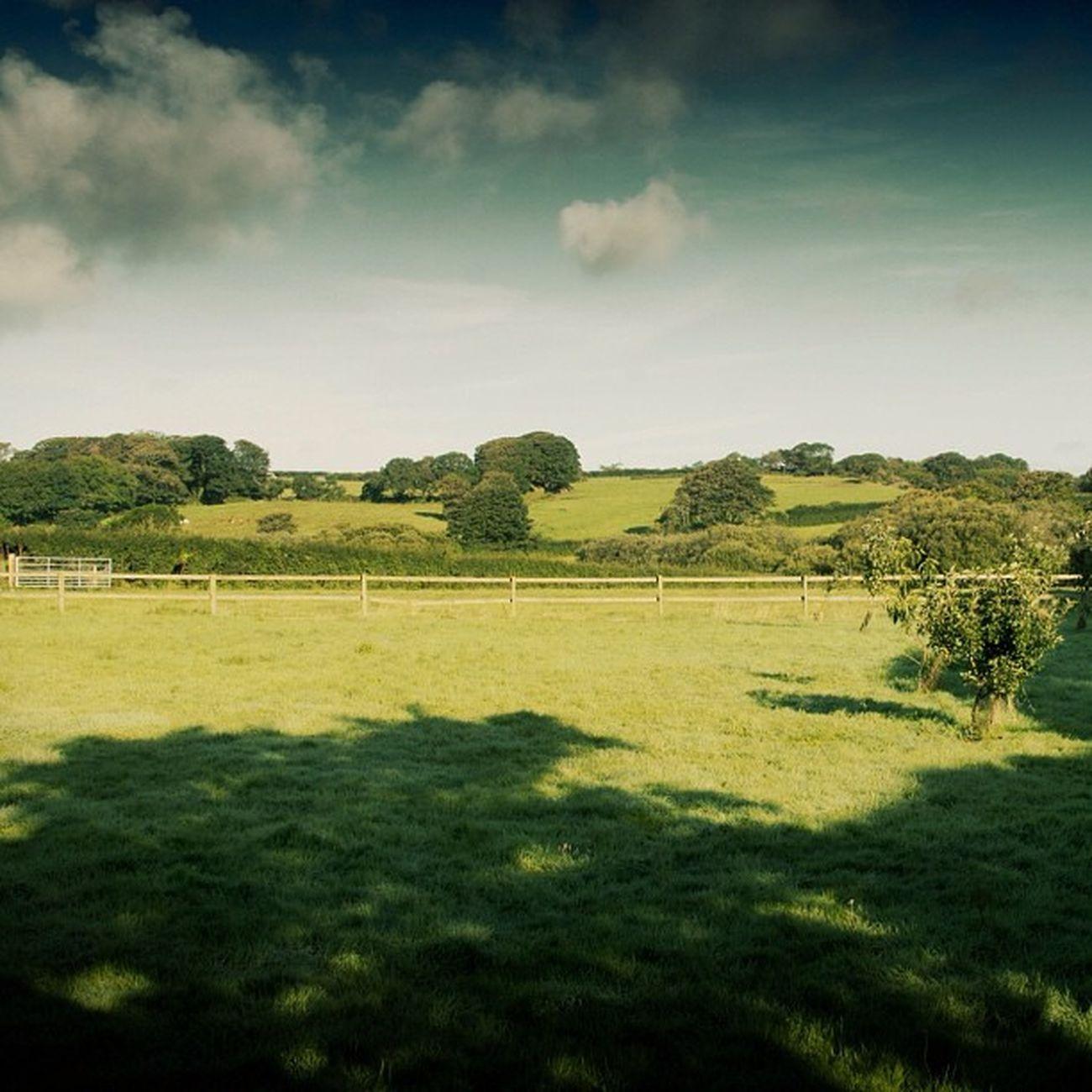 Foxglove Cottage #foxglove #cottage #relubbus #cornwall #view Cottage Relubbus Foxglove View Cornwall
