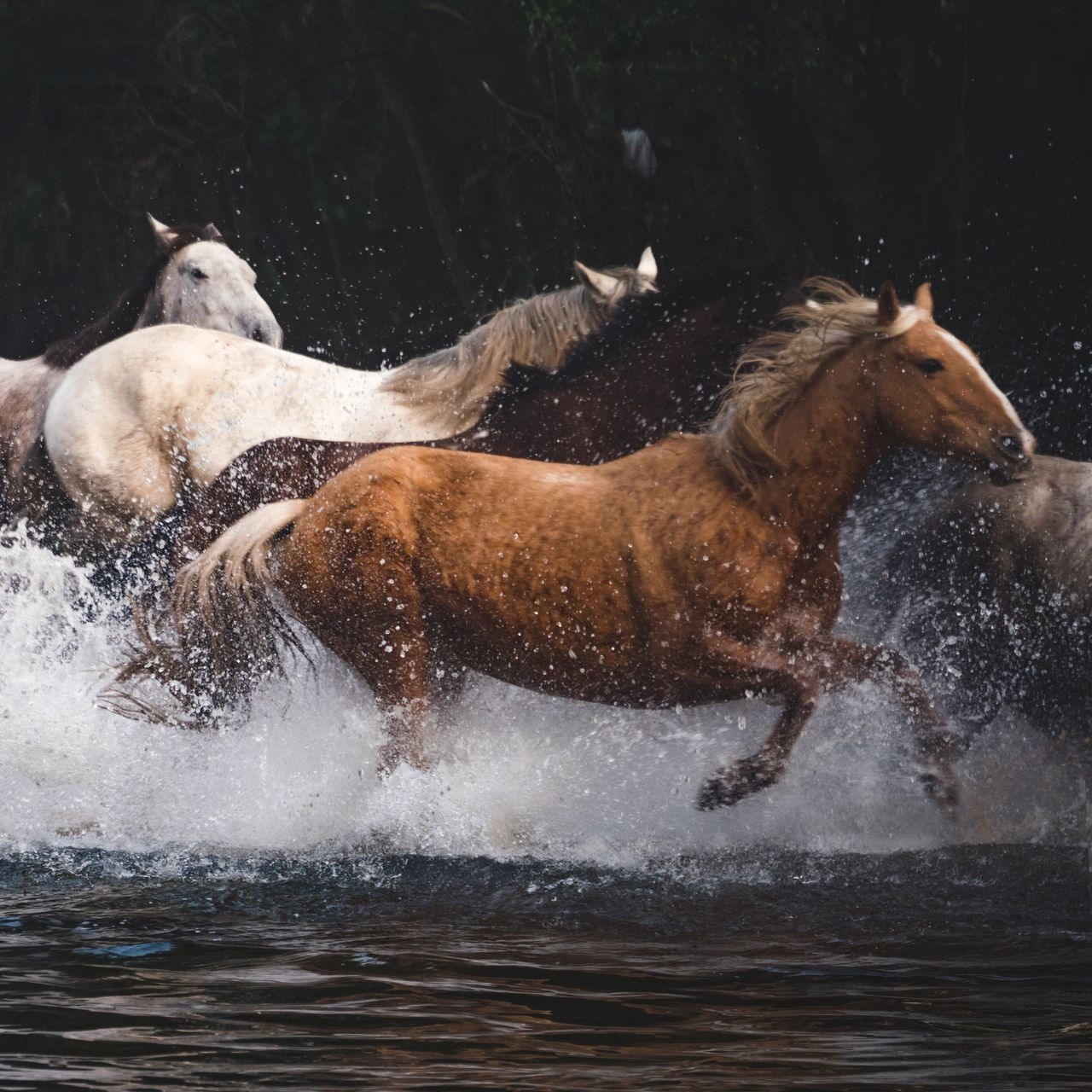 Beautiful stock photos of horse, Animal Themes, Animal Wildlife, Animals In The Wild, Australia