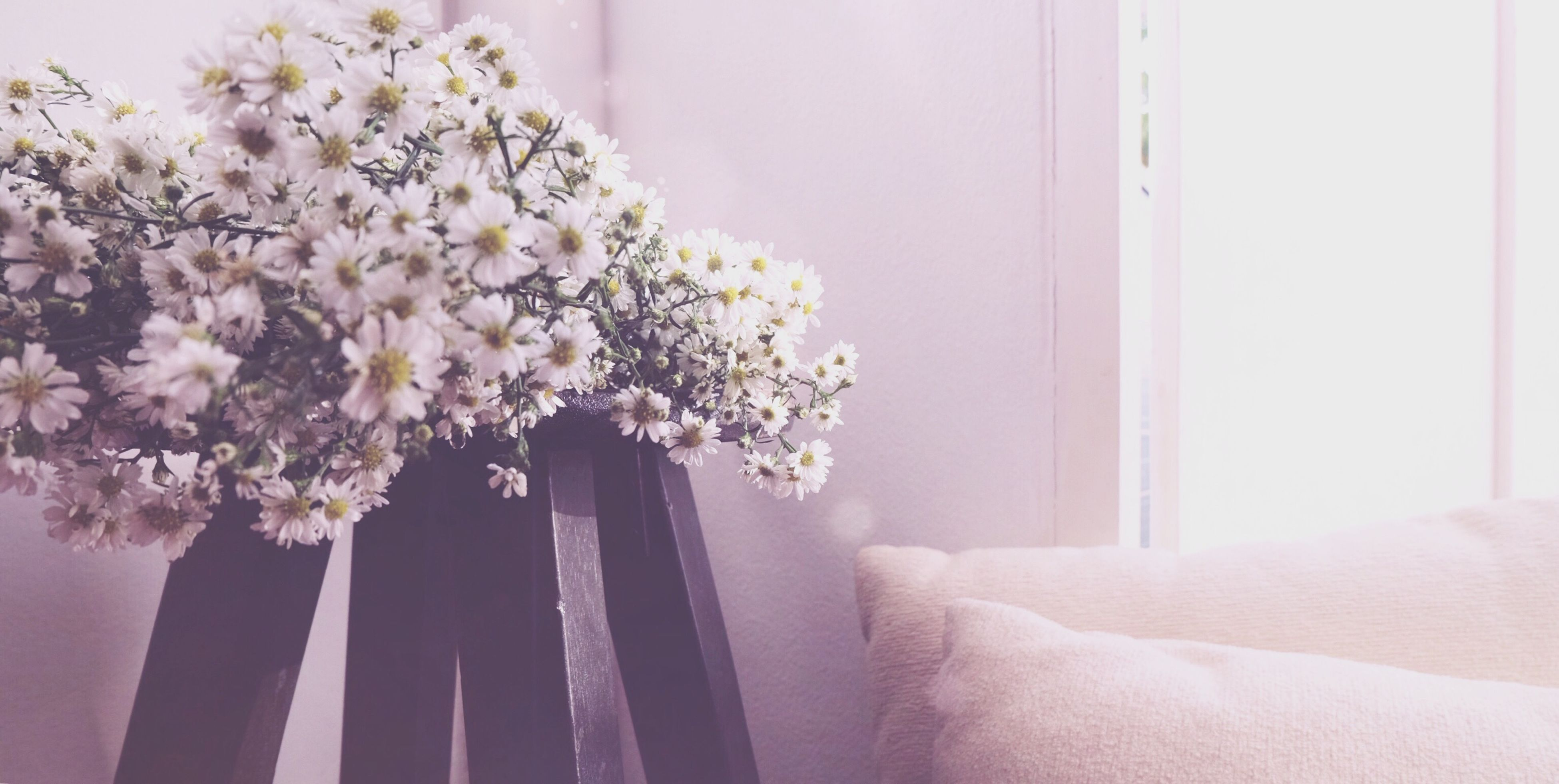 flower, fragility, freshness, indoors, petal, flower head, vase, beauty in nature, person, white color, growth, nature, part of, blossom, blooming, holding, plant, cropped